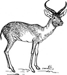 antelope,animal,mammal,biology,zoology,line art,black and white,contour,outline,media,clip art,externalsource,public domain,image,png,svg,wikimedia common,psf,wikimedia common,wikimedia common,wikimedia common