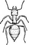 animal,insect,ant,biology,zoology,entomology,line art,black and white,contour,outline,media,clip art,externalsource,public domain,image,png,svg,wikimedia common,psf,wikimedia common,wikimedia common,wikimedia common