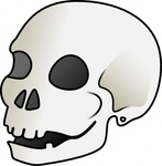 human,skull,bone,cartoon