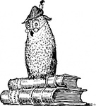 wise,book,owl,knowledge