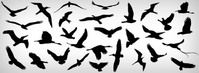 flying,bird,different,nature,seagull,fly,dove,flying bird,idealhut,seagull,bird,bird,seagull,bird,bird
