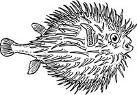 blowfish,animal,fish,media,clip art,externalsource,public domain,image,png,svg