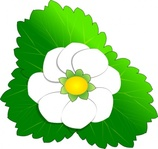 strawberry,flower,spring,green,white,color,media,clip art,public domain,image,svg