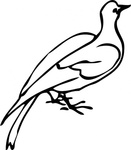 dove,animal,bird,media,clip art,externalsource,public domain,image,png,svg