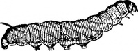 caterpillar,animal,insect,media,clip art,externalsource,public domain,image,png,svg