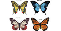 animal,_animals,butterfly