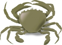 crab,nature,animal,sea creature,marine,beach,seashore,summer,media,clip art,how i did it,public domain,image,png,svg