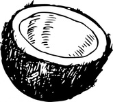 coconut,food,fruit,exotic,half,line art,black and white,contour,outline