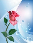 rose,blue,background,with,water,bubble