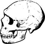 skull,media,clip art,public domain,image,png,svg,people,face,history