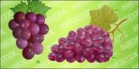 bunch,grape,material