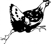 running,animal,bird,chicken,hen,media,clip art,externalsource,public domain,image,png,svg