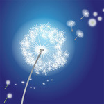 dandelion,flower,nature,vector flower,dandelion flower