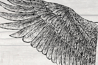 hand drawn,wing,bird