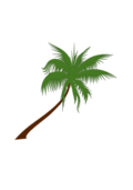 coconut,palm,tree