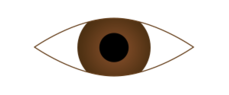 eye,human,eyeball,pupil,cornea