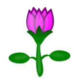 lotus,fancy,flower,pink,cartoon,plant,water,lotus,svg,png,inkscape