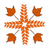 autumn,fall,leaf,plant,maple,decoration