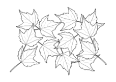 bujung,line art,fall,black and white,leaf,coloring book,plant,maple,fall2010,leaf,plant