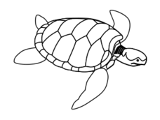 turtle,green,animal,reptile,ocean,sea creature,black and white,line art,outline,coloring book,public domain,png,svg