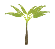 plant,tree,jungle,palm,leaf,trunk,illustrator,layered,media,clip art,public domain,image,svg