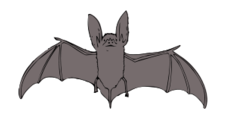 clip art,remix,media,public domain,image,png,svg,animal,mammal,bat