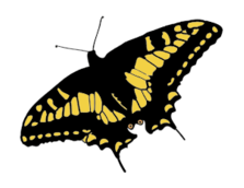 butterfly,nature,bug,media,public domain,svg,image