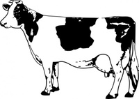 animal,mammal,cow,bovine,black & white