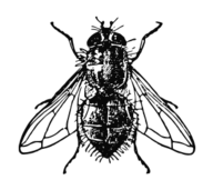 media,clip art,public domain,image,png,svg,animal,insect,housefly,fly