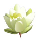 media,clip art,public domain,image,png,svg,water lily,flower,plant,nature,lily,waterlily